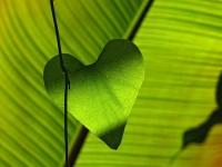 corazon-verde